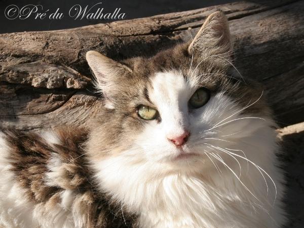 Photo de Tabatha