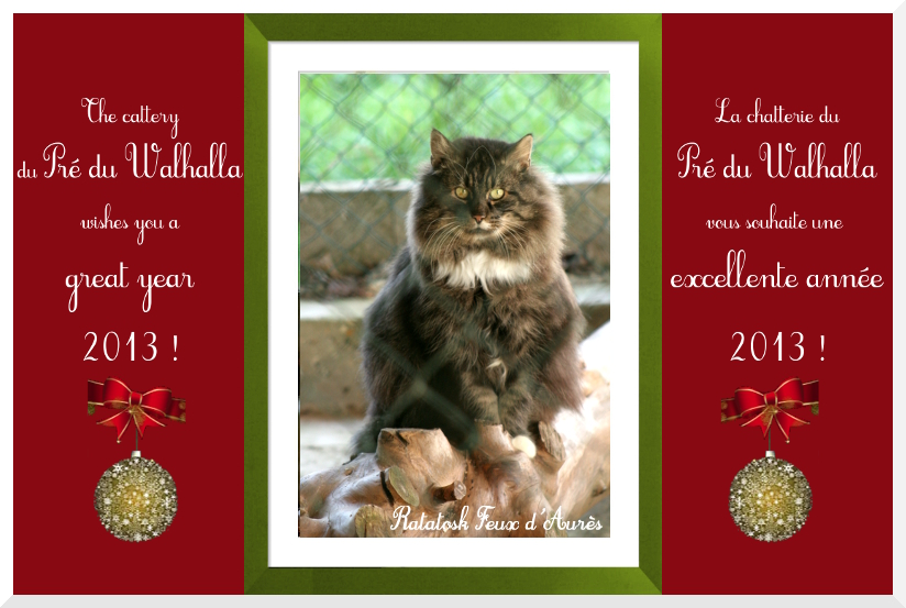 Pré du Walhalla's norwegian forest cats, happy new year 2013