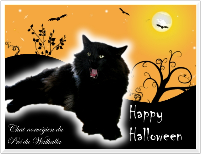 carte chat norvégien d'Halloween